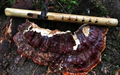 The Magic Reishi Mushroom